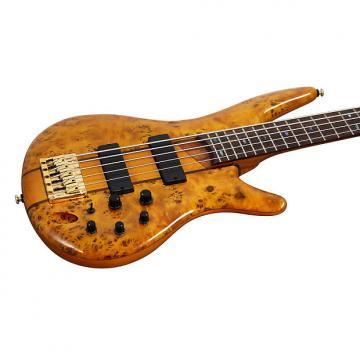 Custom Ibanez SR805 AM Standard Poplar Burl Amber Electric Bass